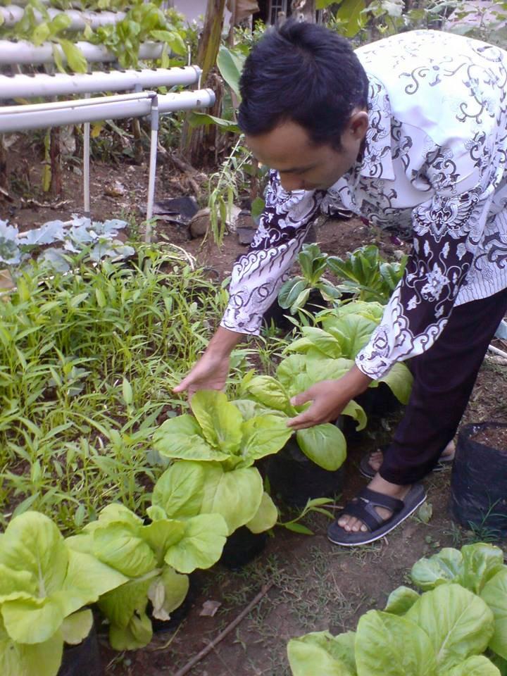 Bertanam Pakcoy Hidroponik