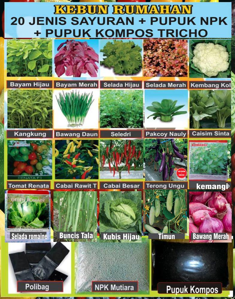 Paket Promo Kebun Rumahan