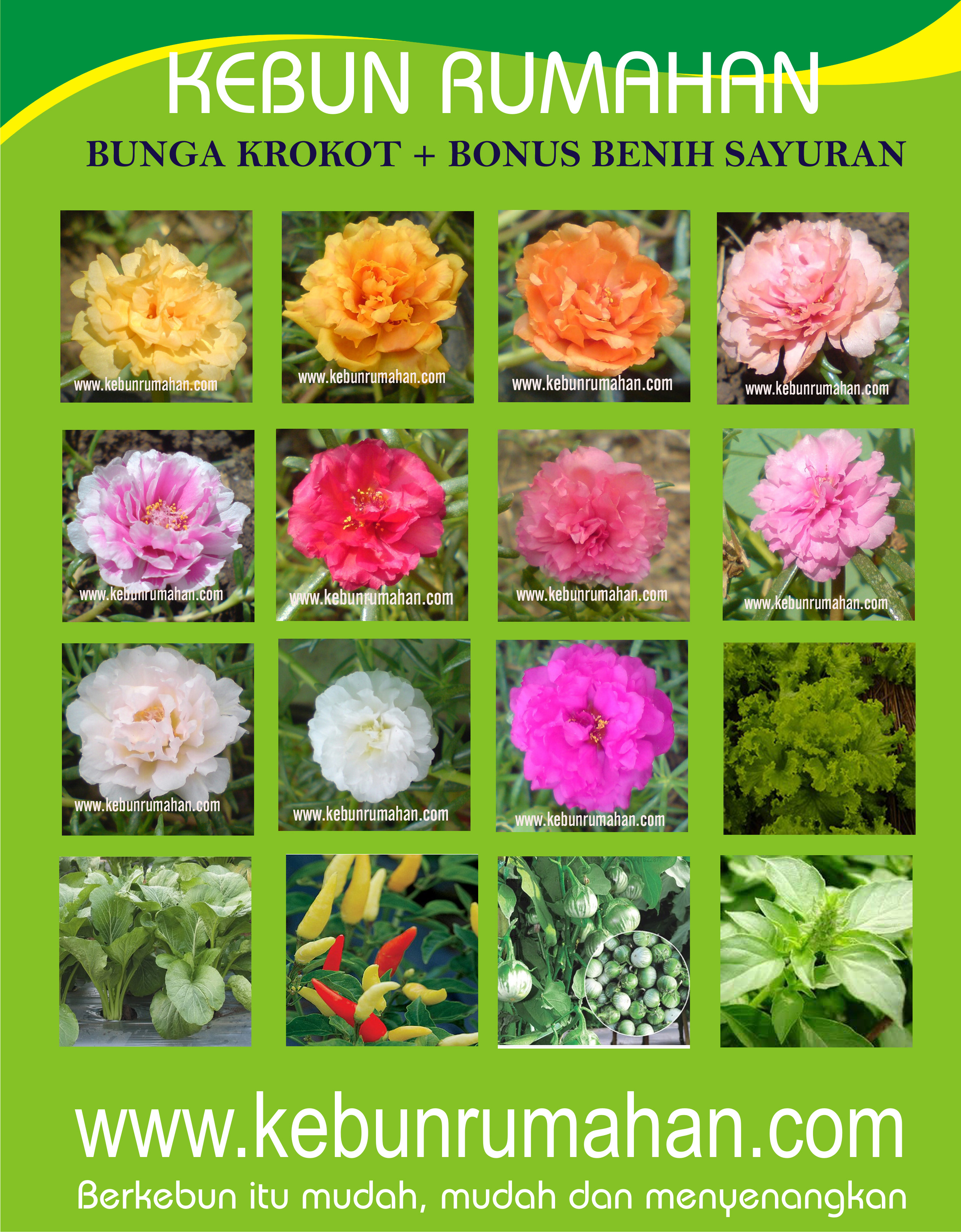 Bibit Bunga Moss Rose